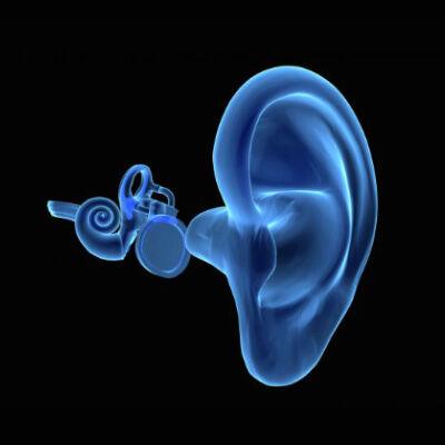 ear-anatomy-Vasiliadis-ORL